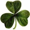150px-Irish_clover-tm.jpg
